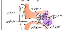 استاپدکتومی